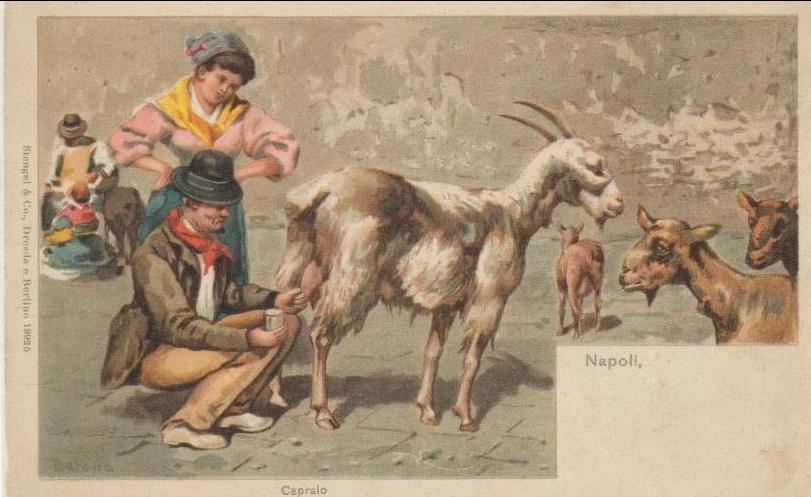 Napoli_-_venditore_di_latte_di_capra_(capraio)_-_Naples,_selling_goat_milk