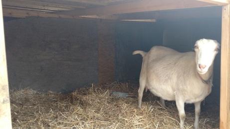 goat-shelter-e