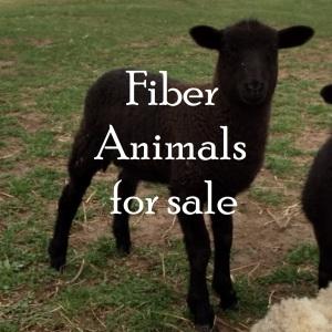 Fiber animals for sale