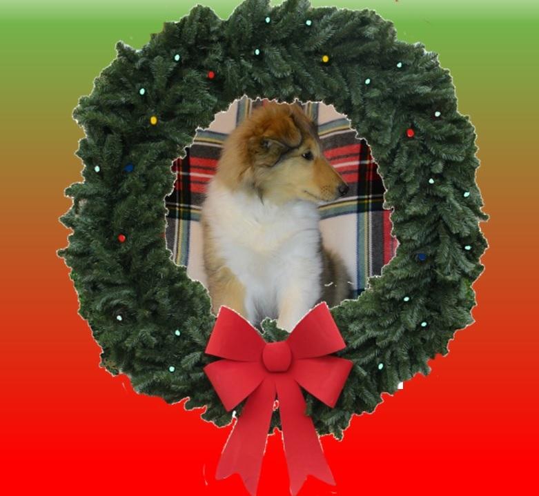 Shep-Wreath-2
